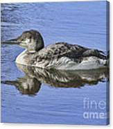Loon On Vacation Canvas Print
