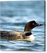 Loons 7 Canvas Print