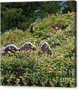 Lost Amongst The Vines Canvas Print