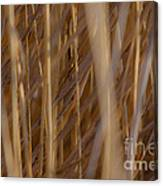 Lost In The Reed Canvas Print