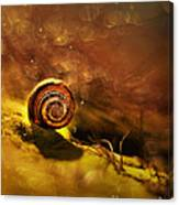 Lost Shell Canvas Print