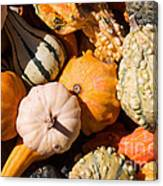 Lots Of Little Gourds Canvas Print