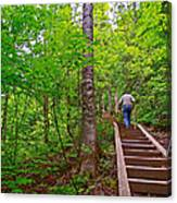 Lots Of Steps On La Chute Trail In Forillon Np-qc Canvas Print