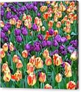 Lots Of Tulips Canvas Print