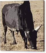 Lotta Bull Canvas Print