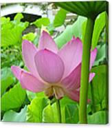 Lotus And Bridge Canvas Print