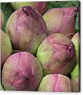Lotus Buds Canvas Print