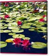 Lotus Dream Canvas Print