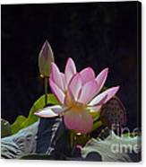 Lotus Enchantment Canvas Print