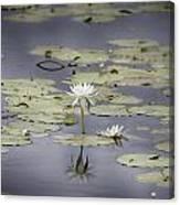 Lotus Flower- Gungarre Billabong V3 Canvas Print