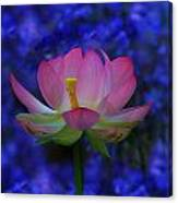 Lotus Flower In Blue Canvas Print