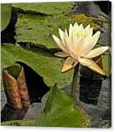 Lotus Flower In White Canvas Print
