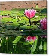 Lotus Flower Reflections Canvas Print