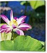 Lotus Flower V6 Canvas Print
