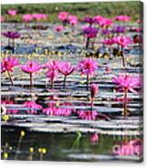 Lotus Flowers Canvas Print