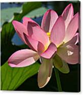 Lotus - Flowers Canvas Print