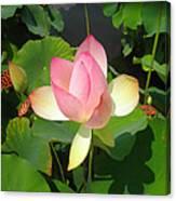 Lotus I Canvas Print
