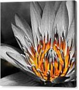 Lotus On Fire Canvas Print