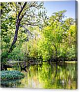 Louisiana Bayou Canvas Print