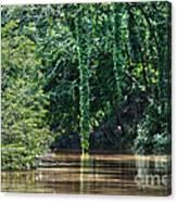Louisiana Bayou Toro Creek Swamp Canvas Print