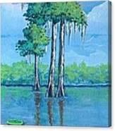 Louisiana Cypress Canvas Print