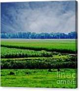 Louisiana Greenway Canvas Print