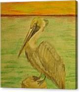 Louisiana State Bird Canvas Print