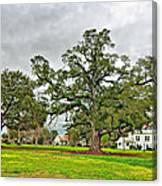 Louisiana Winter 2 Canvas Print