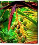 Loulu Palm Canvas Print
