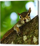 Lounging Squirrel Canvas Print