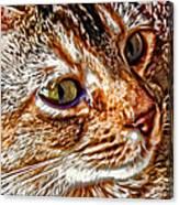 Lovable Anya Canvas Print