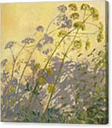 Lovage Clematis And Shadows Canvas Print