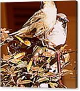 Love Birds II Canvas Print