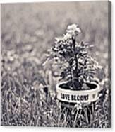 Love Blooms Canvas Print
