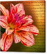 Love Letter To Dahlia Canvas Print