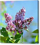 Love My Lilacs Canvas Print