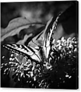 Eclectus Parrot  - Eclectus Roratus Canvas Print