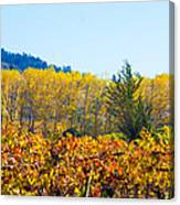 Lovely Fall Colors Canvas Print