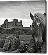 Lovely Horse And Tantallon Castle Canvas Print