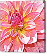 Lovely In Pink - Dahlia Canvas Print