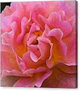 Lovely In Pink Canvas Print
