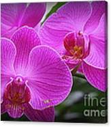 Lovely In Purple - Orchids Canvas Print