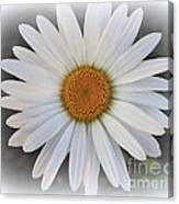 Lovely In White - Daisy Canvas Print