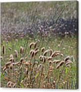 Lovely Layers Of Grass Canvas Print