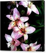 Lovely Lilies Canvas Print