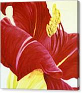 Lovely Lily Floral Print Canvas Print