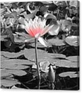 Lovely Lily Canvas Print