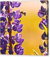 Lovely Lupins And Busy Bee Canvas Print