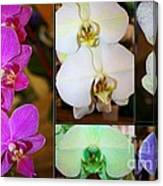 Lovely Orchids - A Collage Canvas Print