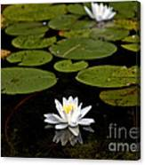 Lovely Pond Lily Canvas Print